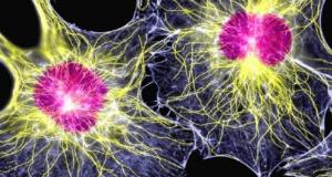 Ученые разработали новый способ создания более чистых бета-клеток